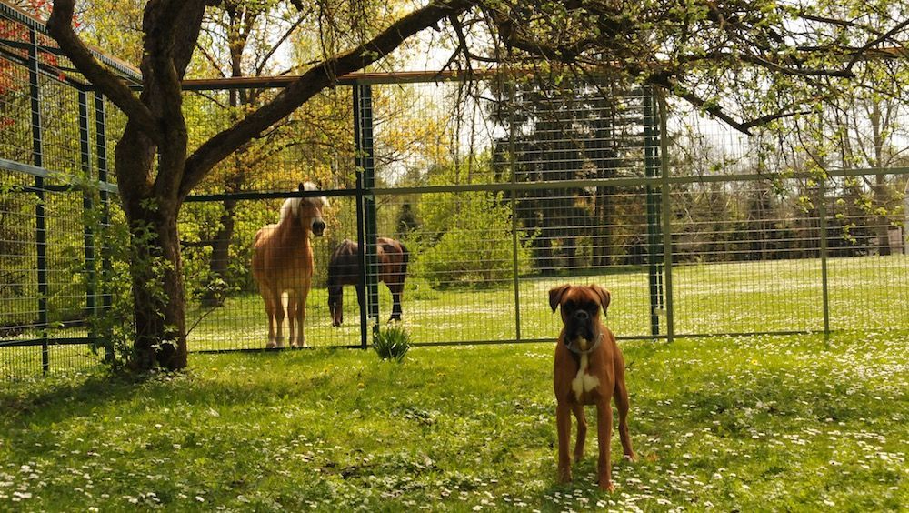 Hundepension Gaaden